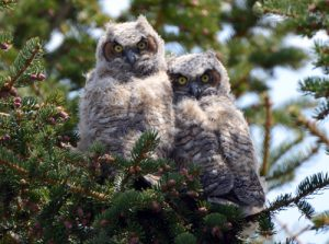 Off Nest !!