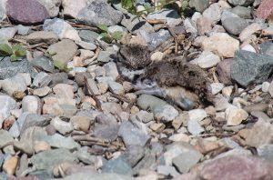 Owl Chicks & More