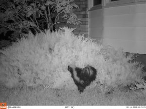 Wildlife Camera Photos