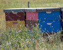 Bees !!! & more Wildlife :-)